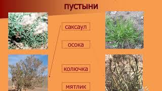 АКР№1 Природоведение 5 класс 3 четверть