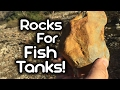 Collecting Rocks for Fish Tanks