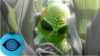 Sind Kornkreise ein Beweis für Aliens?