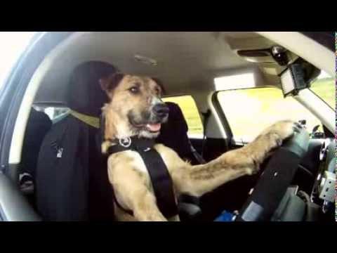 Watch Dogs  Driving Drifting