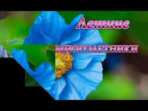 ГОЛУБАЯ клумба -подборка цветов.Blue flower