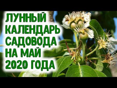Лунный календарь садовода на май 2020 года. Агропрогноз важных садовых дел - защита от вредителей... | садовода_2020 | огородника | календарь | горяченко | садовода | рассада | лунный | май_2020 | раиса | года