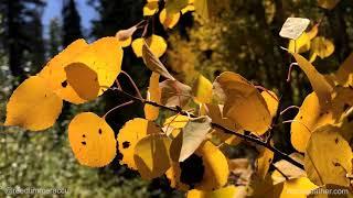 Vivid fall colors on Hadley Gulch Trail in western Colorado