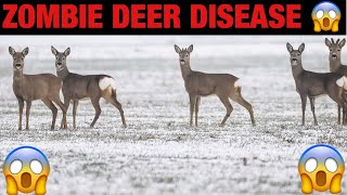 'Zombie deer' disease found in 17 Illinois counties, 24 states!