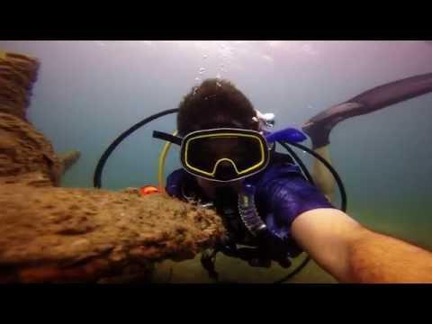 Dive Blue Heron Bridge -  Sharks Spotted