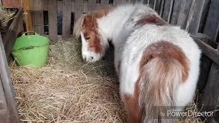 Mon écuries privée vidéo 66 (présentation de mes poneys)