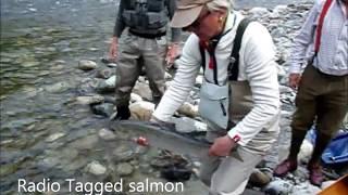 Salmon Fishing with Ian Gordon