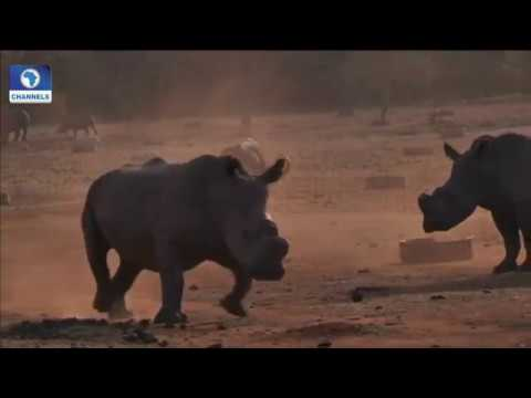 The Way Out Of Illegal Wildlife Trade Pt.3 |Earthfile|
