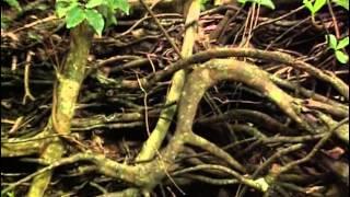 Martinique : 6 randonnées - Documentaire COMPLET