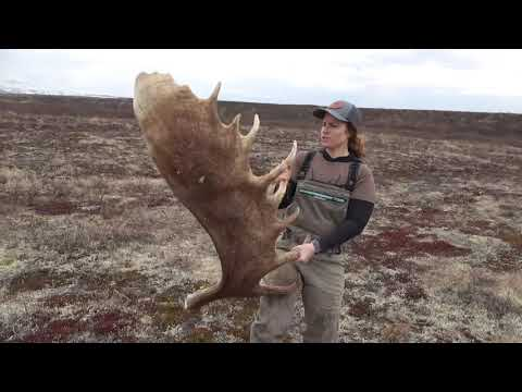 """Day 1"" Shed hunting for Alaskan Moose – Stuck N The Rut 2020"