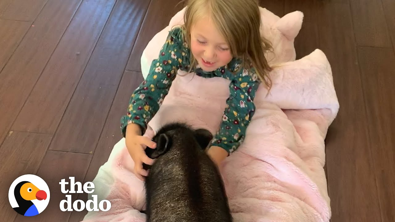 Little Girl Decides To Save A Tiny Piglet  | The Dodo Heroes