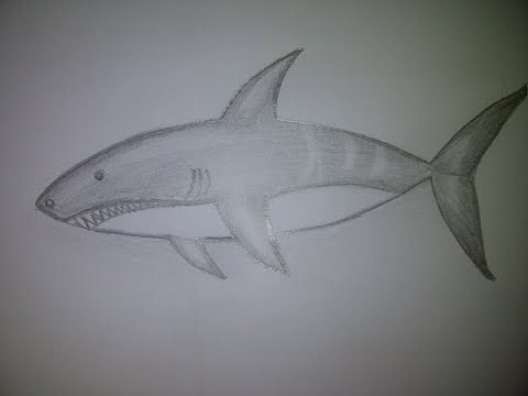 Einen Hai zeichnen. Zeichnen lernen für Anfänger