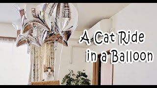 A Cat Ride In A Balloon 風船気球に乗る猫【amazing】【衝撃!?】