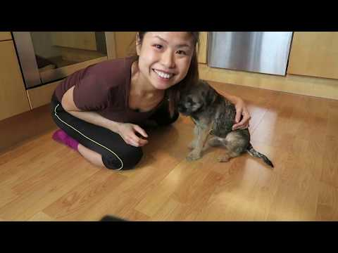 20190321 Border Terrier training