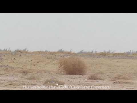 верблюжья интересные колючка факты