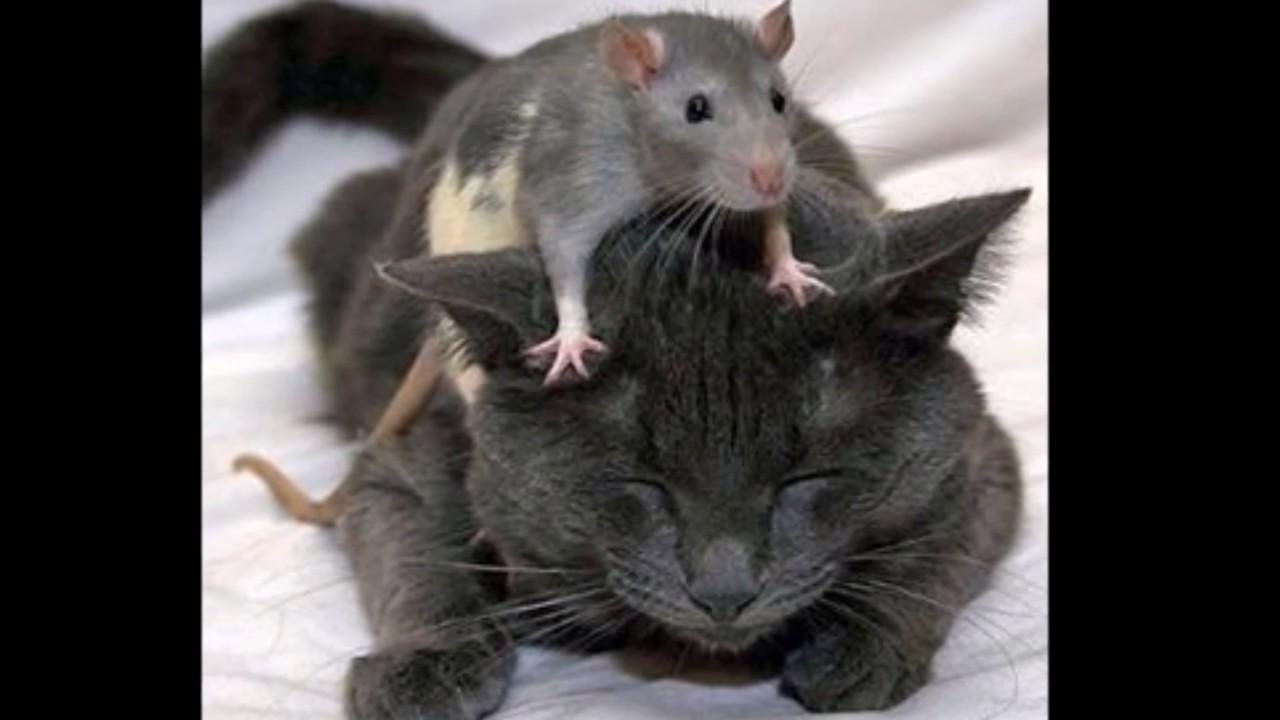 【クスっと笑える、可愛い、おもしろい】猫のスライドショー