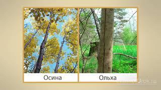 Леса России  Видеоурок по окружающему миру 4 класс online video cutter com 3