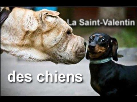 La saint valentin des chiens parole de chien youtube - Parole saint valentin ...