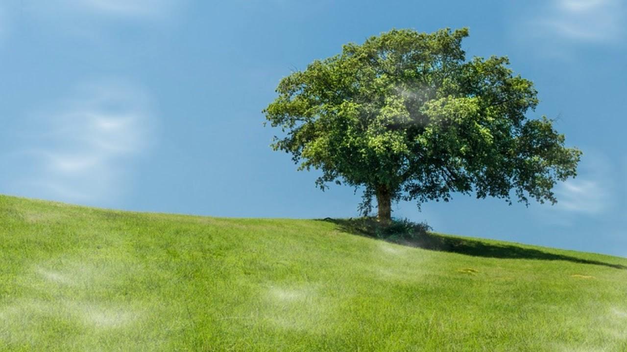 เหมือนต้นไม้