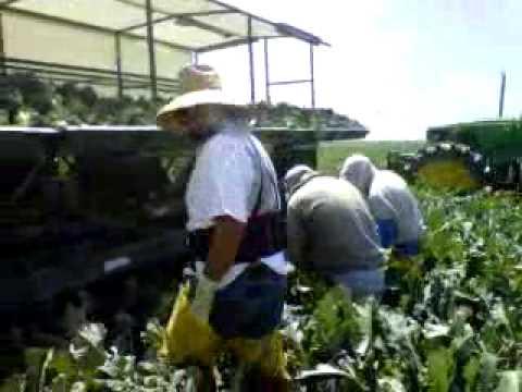 Video de eduardo en salinas california