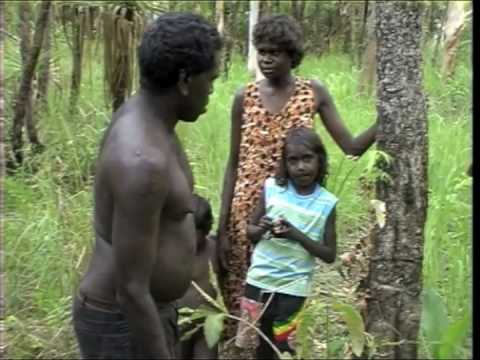 Indigenous preparation of Djitama (bush yam) | bush tucker | Ramingining