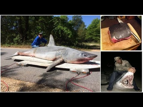 Land based Shark Fishing Record: Man catches and eat 11ft ...