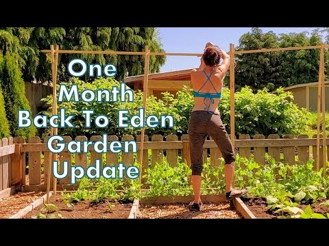 Feed Your Family with A Permaculture Back To Eden Garden – DIY Organic Gardening