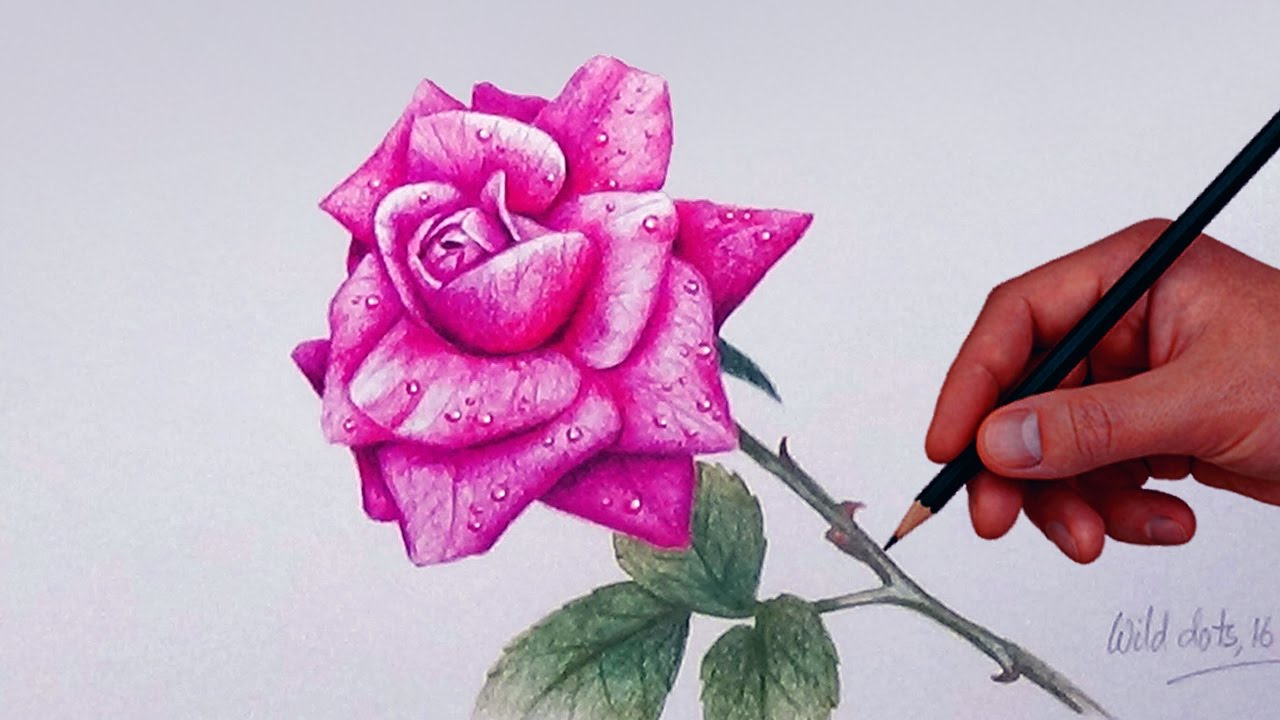 How To Draw A Rose With Simple Colored Pencils