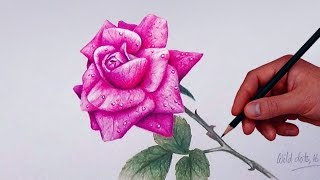 pencil rose drawing colored flower flowers draw simple pencils drawings colour shaded shading step drawingartpedia roes roses sketch dots colorful