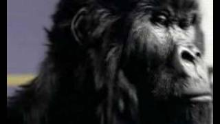 Cadburys: Gorilla Advert: Proclaimers Remix