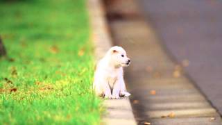 Find Out How To Get Rid Of Pets Pee Odors Smell?