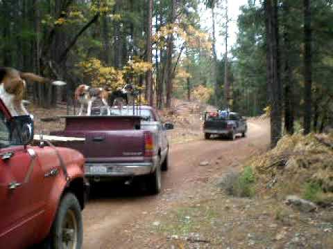 Bear Hunting W/Dogs - YouTube