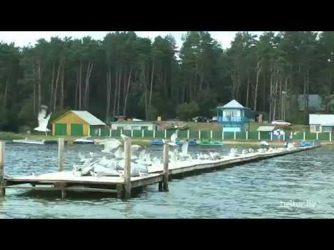 Отдых в Белоруссии на озерах дома отдыха и пансионаты