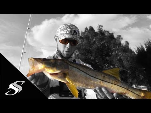 Thumbnail: Snook Fishing Docks with Artificial Baits
