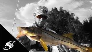 Snook Fishing Docks with Artificial Baits