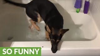 Puppy ecstatic to play with bath water