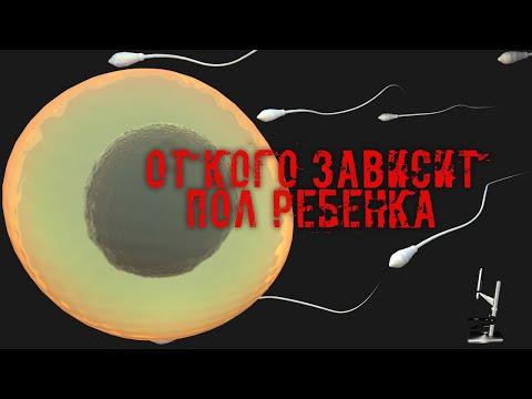 Как делают зачатие ребенка 96