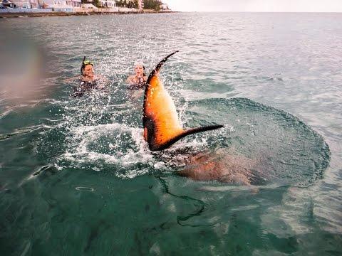 Real Live Mermaid Swimming Sighting Footage Captured