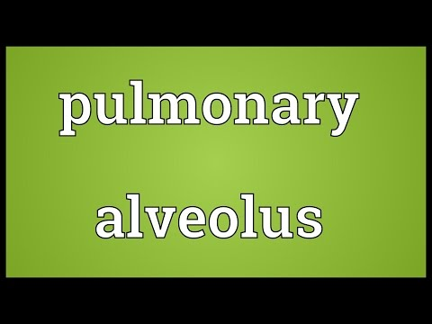 Pulmonary alveolus Meaning