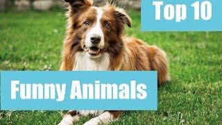 Funny Animals Top 10/Śmieszne zwierzaki/Funny Videos