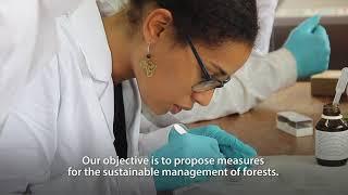 Un laboratoire pour révéler les mystères des arbres tropicaux au cœur du bassin du Congo