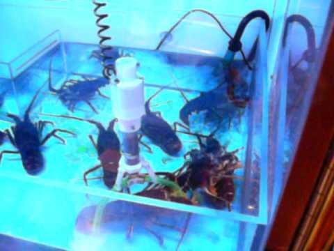 Sub Marine Catcher - Japanese Live Lobster Claw Machine - YouTube