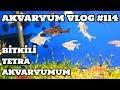 Akvaryum Vlog #114 (Bitkili & Tetra Akvaryumum)