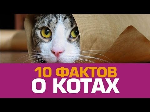 10 милых фактов о КОТАХ - Познавательные и прикольные видеоролики