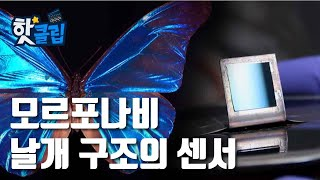 나비의 날개에서 착안한 센서 [핫클립] / YTN 사이…