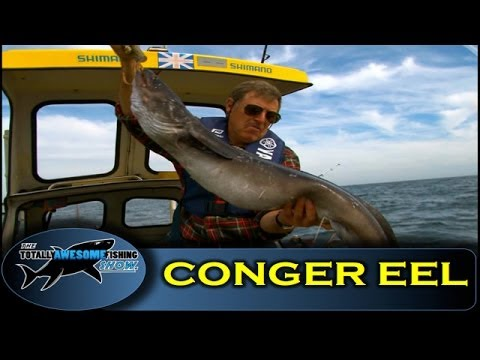 How to catch Conger Eels - Totally Awesome Fishing