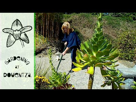 Zen Gardening & Gravel Raking for Mindfulness