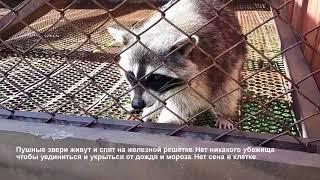 ZOO РАЙ  или ZOO ТЮРЬМА контактный зоопарк на Алтае не всем животным там везет.
