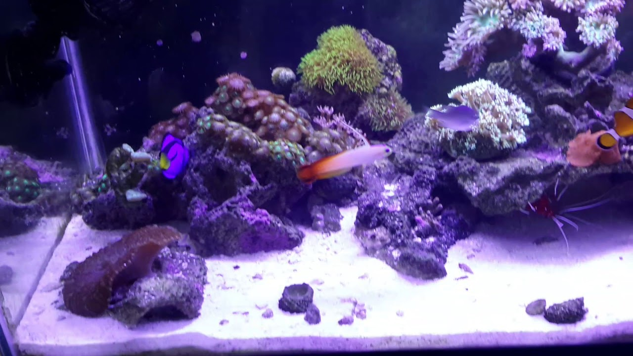 Aquascaping 20 gallon saltwater reef tank - YouTube