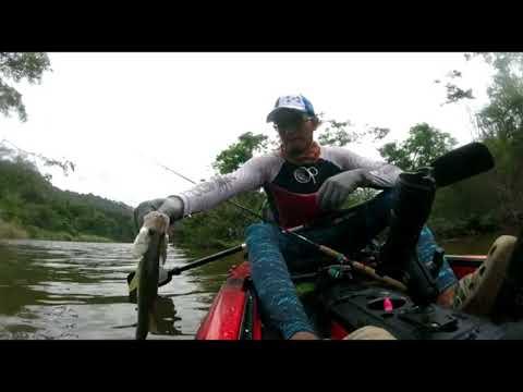 Club de pesca en kayak de panama . Rio Chagres barracuda ,pargo y robalos .